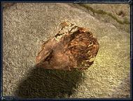 Артефакт медуза